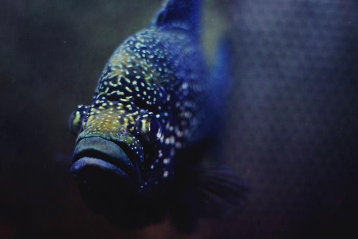 L'aquarium de la porte dorée I