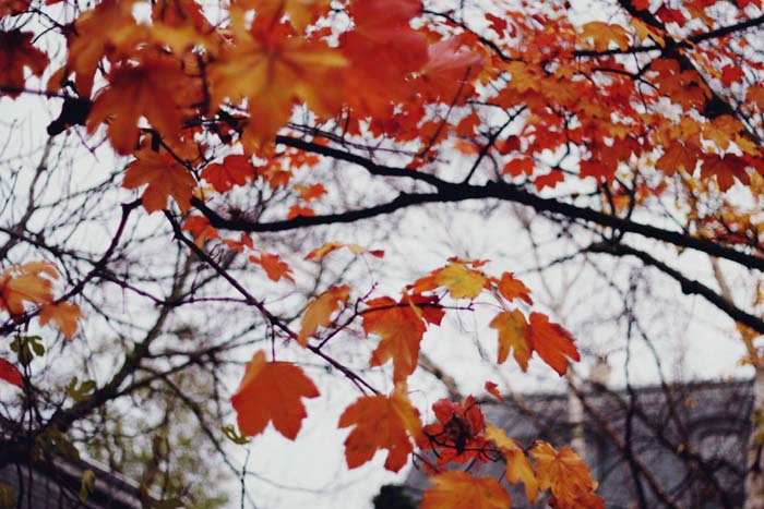 L'automne dans le Marais